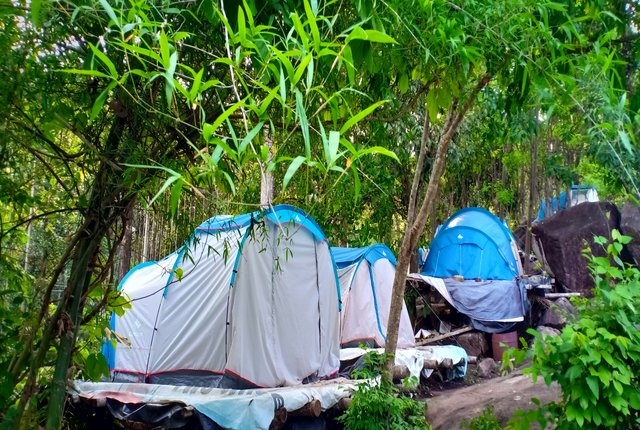 forest camping wayanad