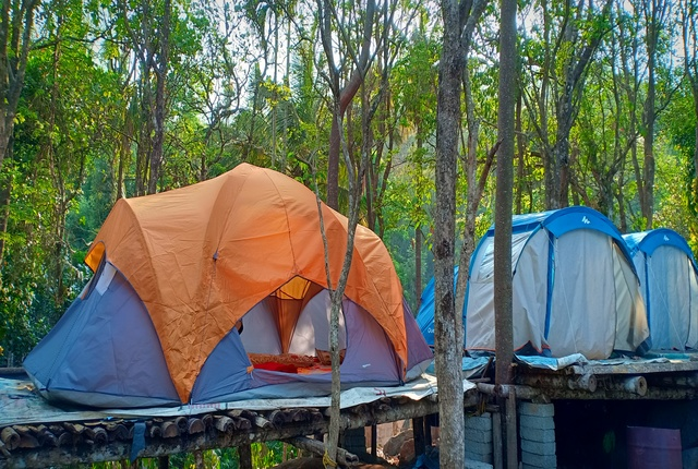 adventure wayanad tent